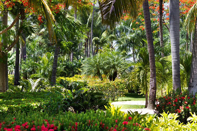 Blog In-article-images themed-garden-series-part-2-tropical-gardens