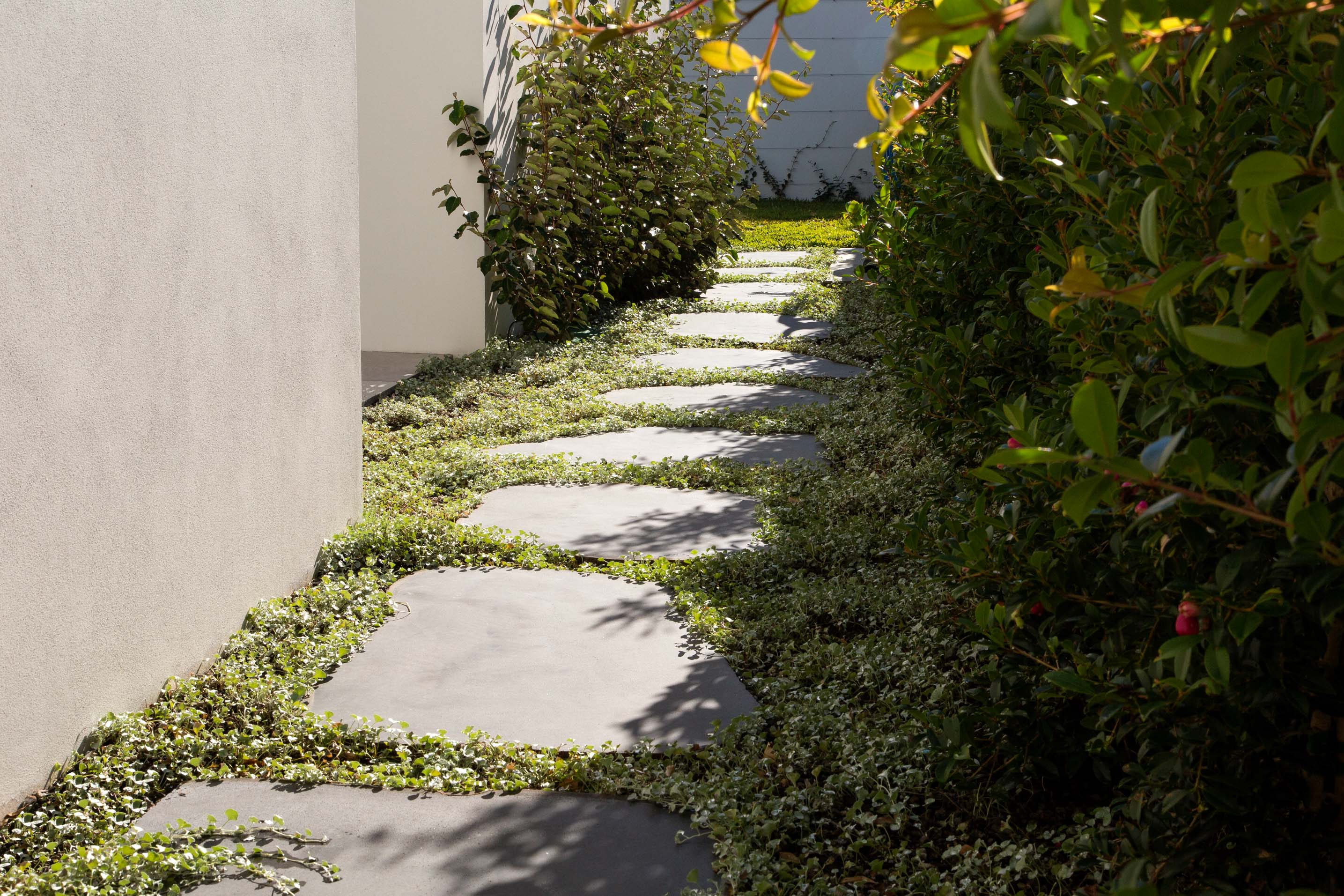 Blog hero-article-images 9-groundcovers-to-plant-around-stone