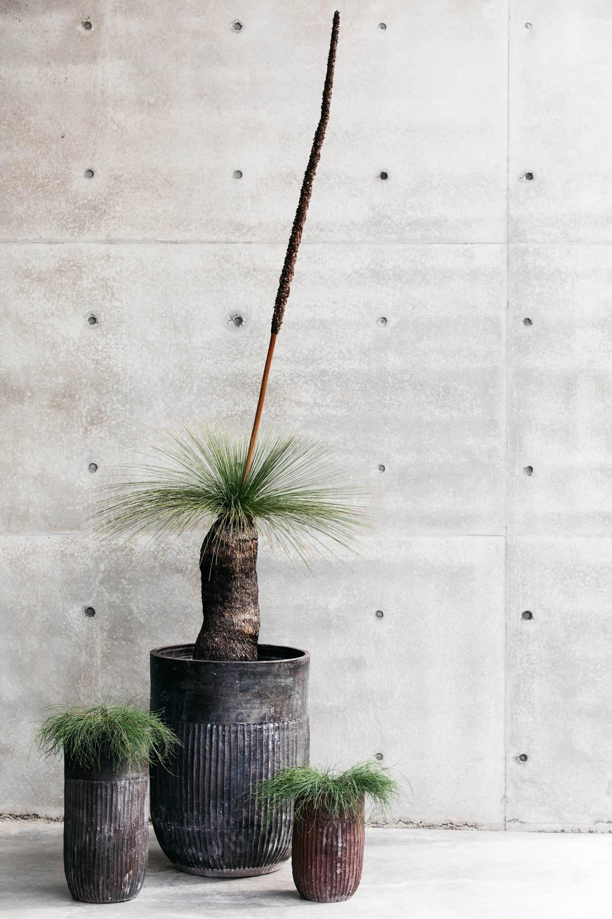 Decor Landare Gallery banksia-copper-06