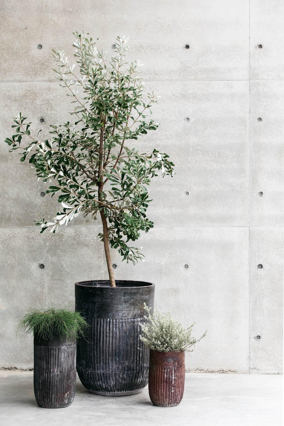 Decor Landare Gallery banksia-copper-05
