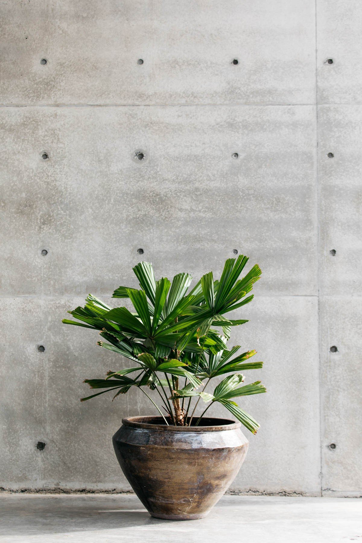 Decor Landare Gallery correa-green-06
